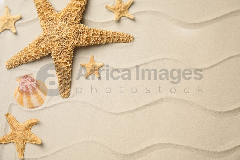 Beautiful sea stars and shell on sand, flat lay. Space for text
