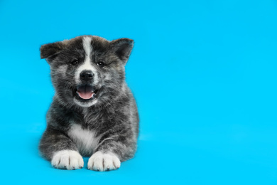 Cute Akita inu puppy on light blue background, space for text. Friendly dog