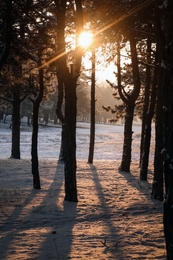 Beautiful view of sunrise in snowy forest on winter morning