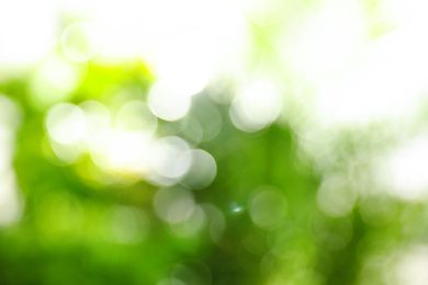 Abstract nature green background with sun rays, bokeh effect
