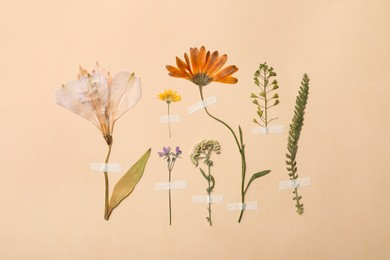 Pressed dried flowers and plants on beige background. Beautiful herbarium