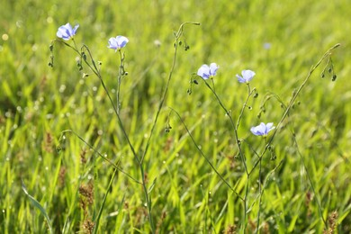 Beautiful flowers growing in meadow on sunny day