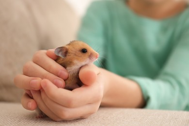 Little girl holding cute hamster at home, closeup