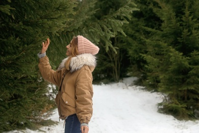 Young woman touching fir branch in snowy forest, space for text. Winter vacation