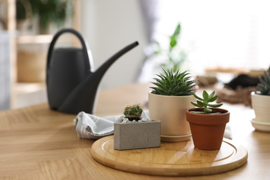 Beautiful potted plants on wooden table at home, space for text. Engaging hobby