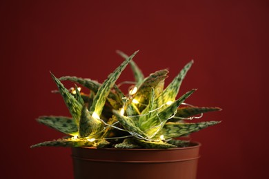 Cactus decorated with glowing fairy lights on red background, closeup
