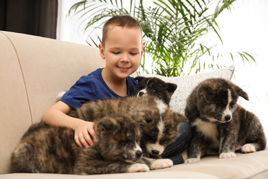 Little boy with Akita inu puppies on sofa at home. Friendly dog