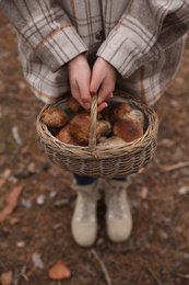 Woman with basket full of wild mushrooms in autumn forest, closeup