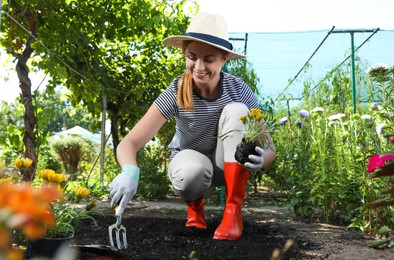 Woman planting flowers outdoors on sunny day. Gardening time