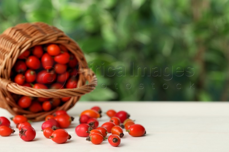 Ripe rose hip berries with overturned basket on white wooden table outdoors. Space for text