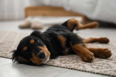 Cute dog relaxing on rug at home. Friendly pet