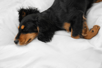 Cute dog relaxing on white fabric at home, above view. Friendly pet