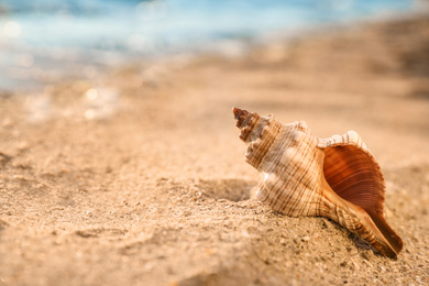 Beautiful sea shell on sandy beach. Space for text