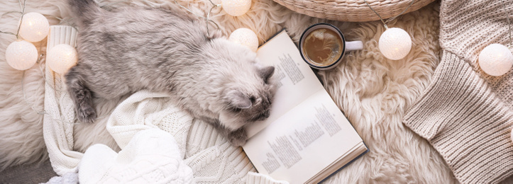 Birman cat, cup of drink and book on rug at home, top view. Banner design