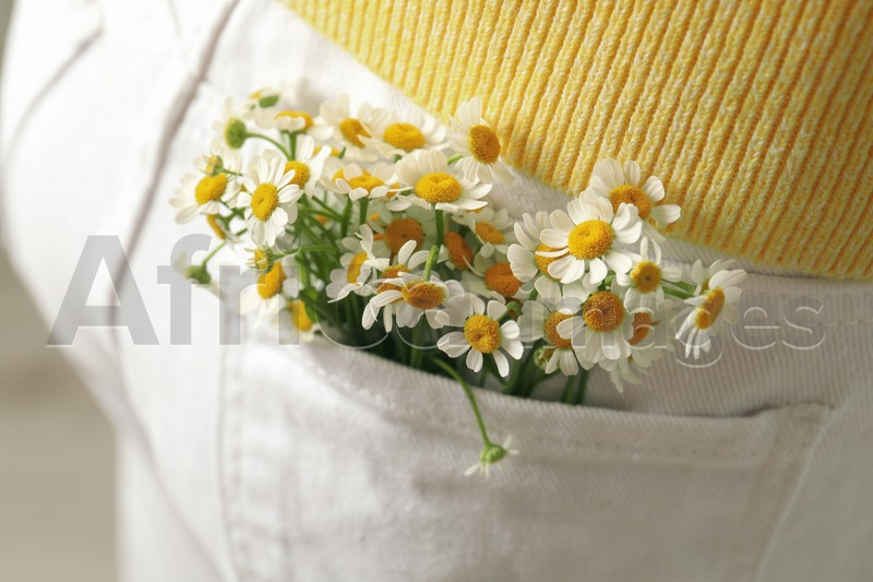 Woman with beautiful tender chamomile flowers in white jeans pocket, closeup