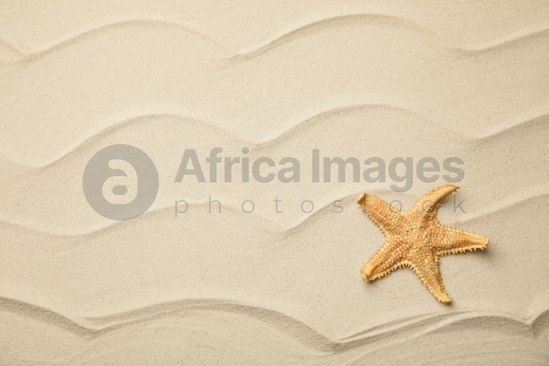 Beautiful sea star on sand, top view. Space for text