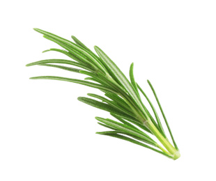 Fresh green rosemary isolated on white. Aromatic herb