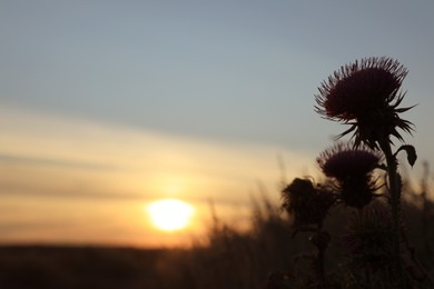 Beautiful wild flowers in field at sunrise, closeup. Early morning landscape