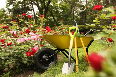 Wheelbarrow and other gardening tools in park on sunny day