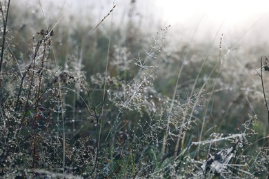 Closeup view of plants with dew drops on wild meadow