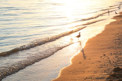 Beautiful view of sea coast with gull at sunset