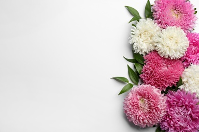 Beautiful asters and space for text on white background, top view. Autumn flowers