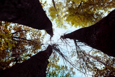 Beautiful trees with bright leaves against sky on autumn day, low angle view