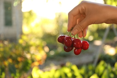Woman with tasty ripe cherries outdoors, closeup