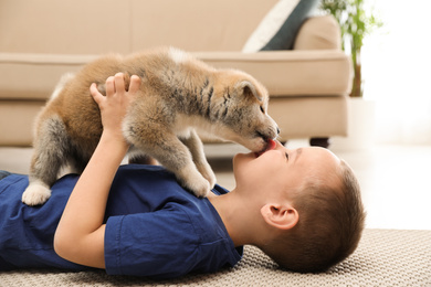 Little boy with Akita inu puppy on floor at home. Friendly dog