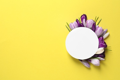 Beautiful spring crocus flowers and card on color background, top view. Space for text
