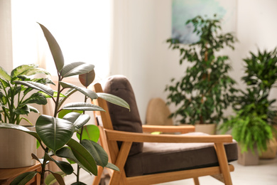Green plants in stylish room. Home design ideas