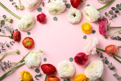 Frame made of spring ranunculus flowers on color background, flat lay. Space for text