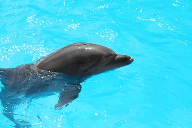Dolphin swimming in pool at marine mammal park