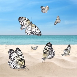 Beautiful view on ocean beach with amazing butterflies