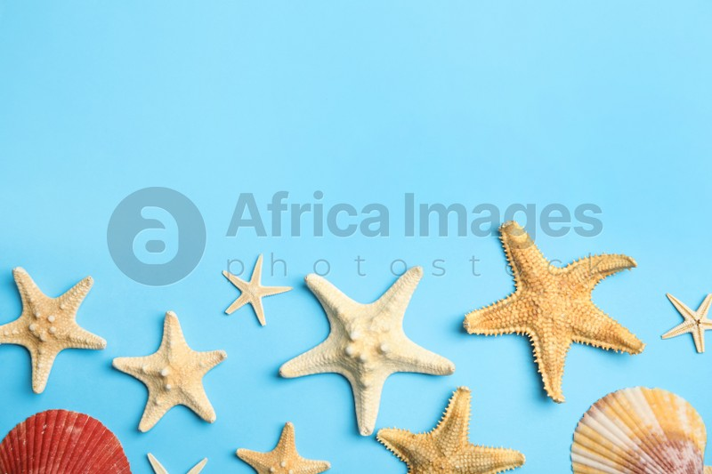 Beautiful sea stars and shells on light blue background, flat lay. Space for text