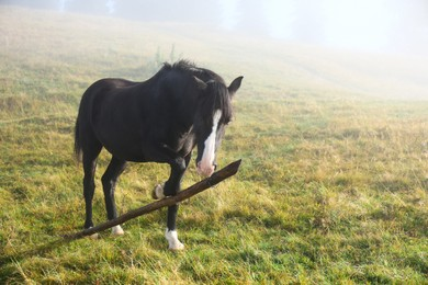 Beautiful view of horse on misty meadow