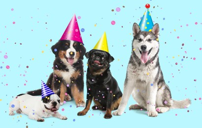 Adorable dogs with party hats on turquoise background