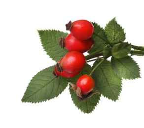 Ripe rose hip berries with green leaves on white background