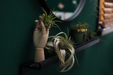Beautiful tillandsia plants and mannequin hand on shelf indoors, space for text. House decor