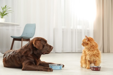 Cat and dog with feeding bowls together indoors. Fluffy friends