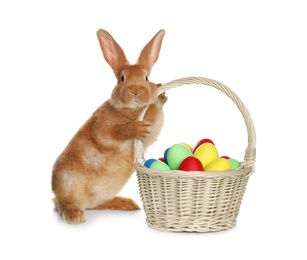 Adorable furry Easter bunny near wicker basket with dyed eggs on white background