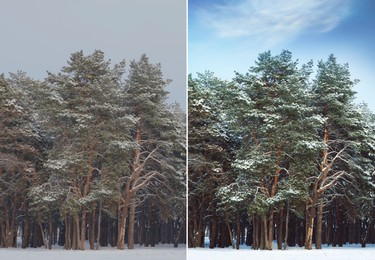Photo before and after retouch, collage. Picturesque view of beautiful forest covered with snow