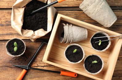 Flat lay composition with young seedlings on wooden table