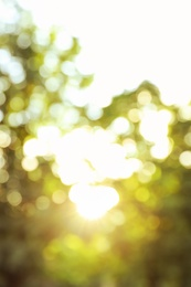 Blurred view of tree branches in park on sunny morning. Bokeh effect