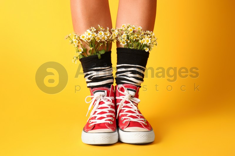 Woman with beautiful tender chamomile flowers in socks on yellow background, closeup
