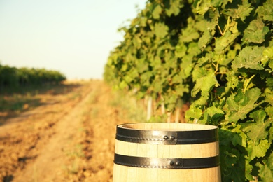 Wooden barrel standing in vineyard on sunny day. Wine production
