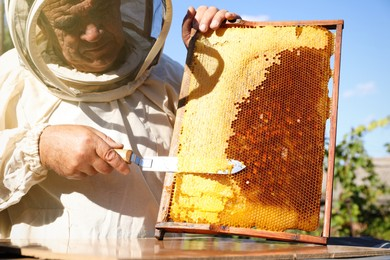 Senior beekeeper uncapping honeycomb frame with knife outdoors