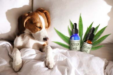 Bottles of CBD oil and cute dog sleeping in bed, top view