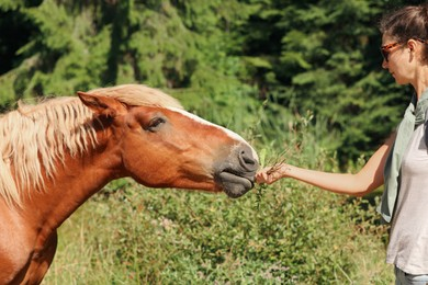 Woman feeding beautiful horse near forest on sunny day, closeup. Lovely domesticated pet