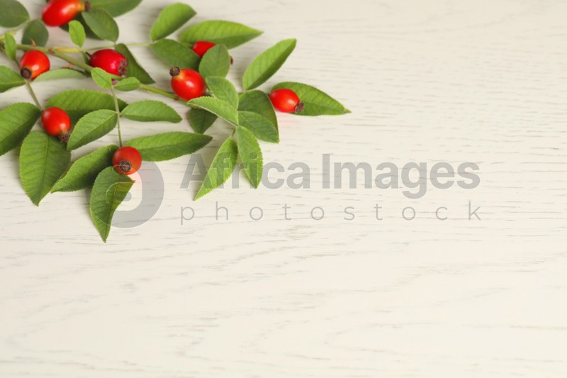 Rose hip branch with ripe red berries and green leaves on white wooden table, above view. Space for text
